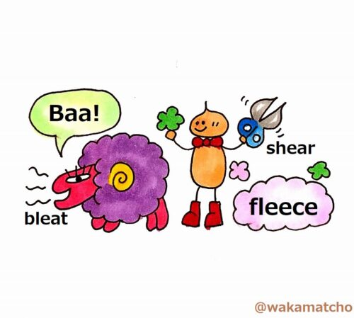 羊に関する単語。words related to sheep